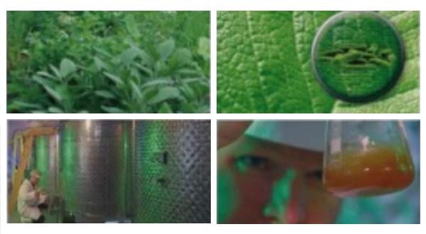 Comfort Herbal Extract