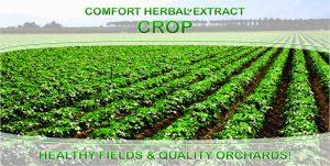 Comfort Herbal Extract Crop